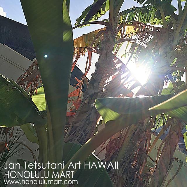 ハワイのバナナの葉っぱの写真